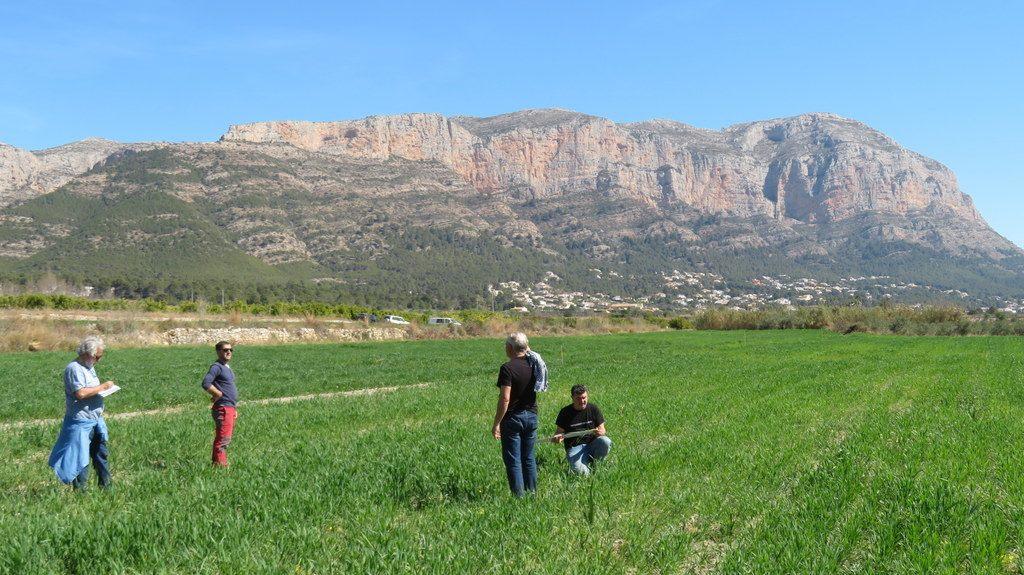 Campo de trigo del Mercat del Riurau